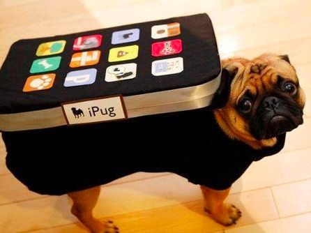 25 Crazy Pet Costumes That Put Yours to Shame | Dog