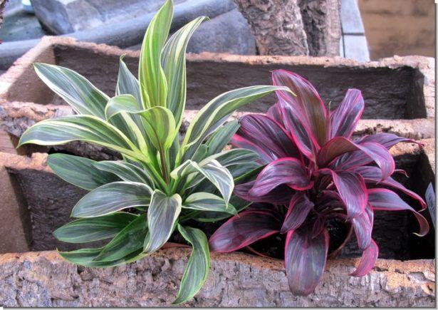 Plantas Para Jardin Exterior Resistentes Al Sol Decoracion De - Plantas-exterior-resistentes