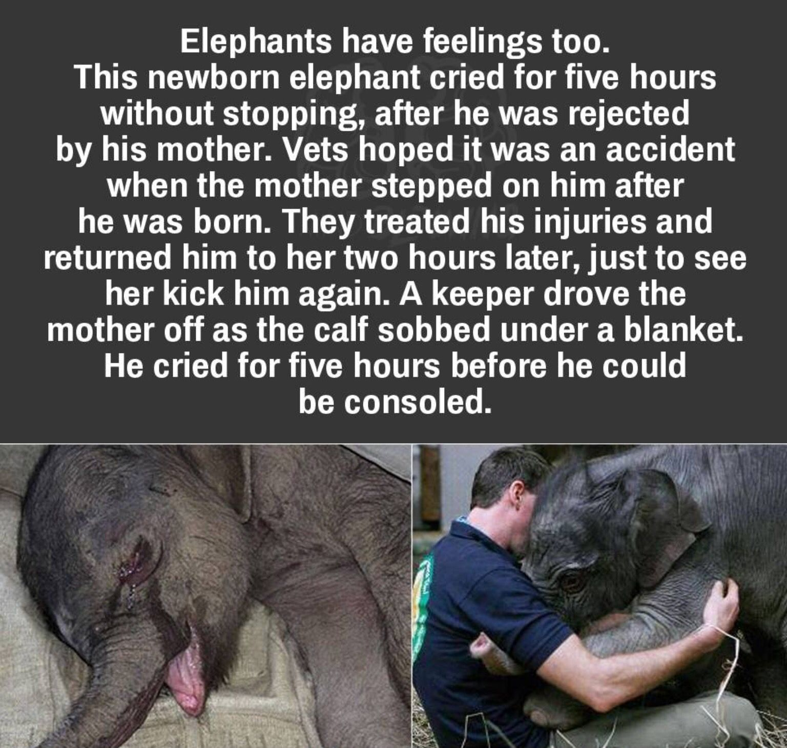 Poor Baby Elephant Facts Animals Beautiful Animal Facts