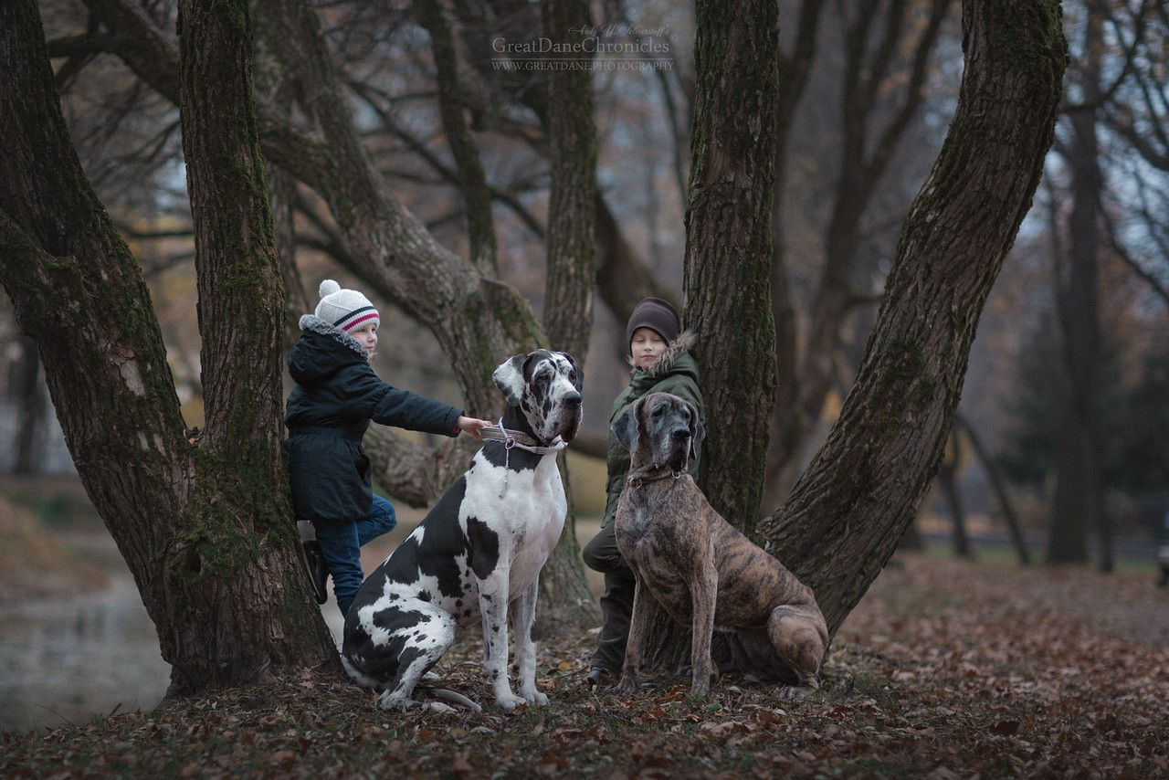 Little Kids And Their Big Dogs GreatDaneChronicles Canis - Tiny children and their huge dogs photographed in adorable portraits by andy seliverstoff