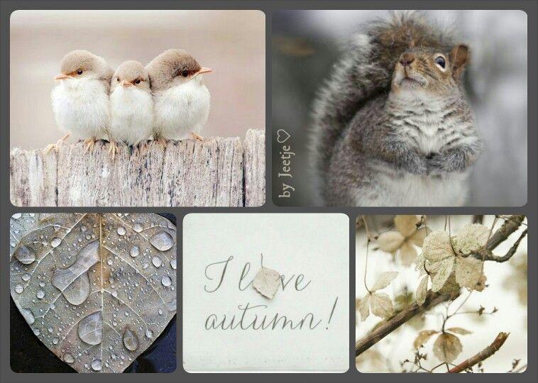 I love autumn! #moodboard #mosaic #collage #byJeetje♡