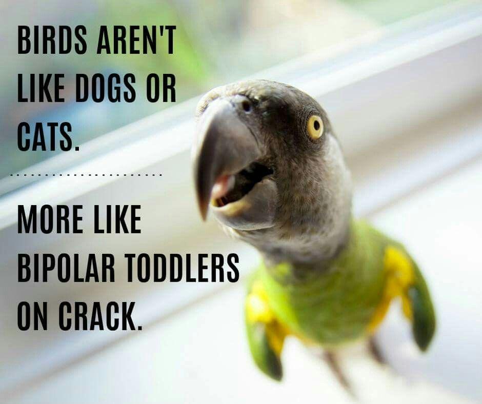 Thats The Truth Parrot Care Birds Parrot Parrot Pet
