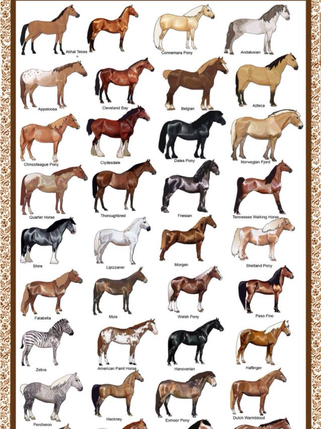 1 Of 3 Horse Facts Horses Horse Breeds