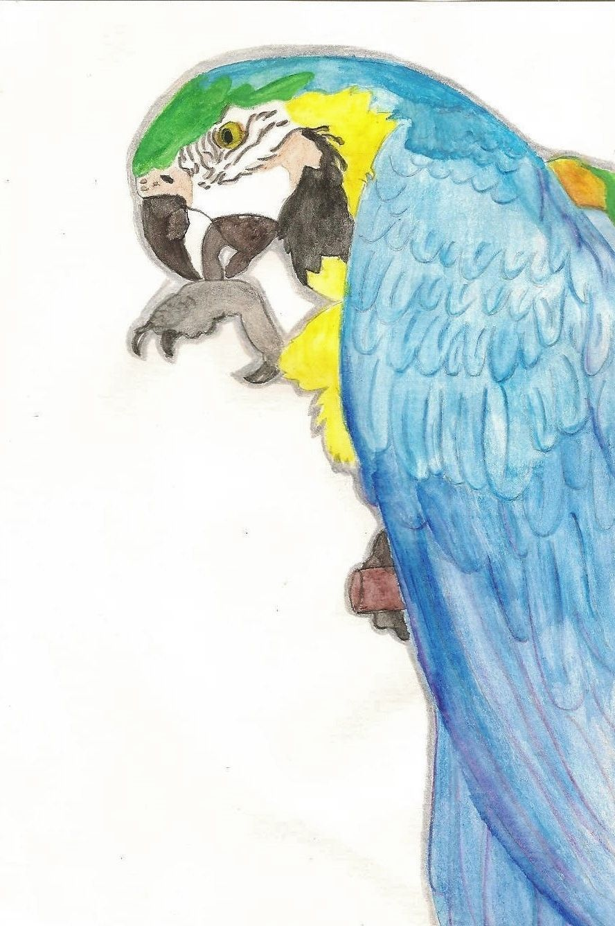 Macaw By Helen Shellard Easy Art Drawing Painting Nature Bird Animal