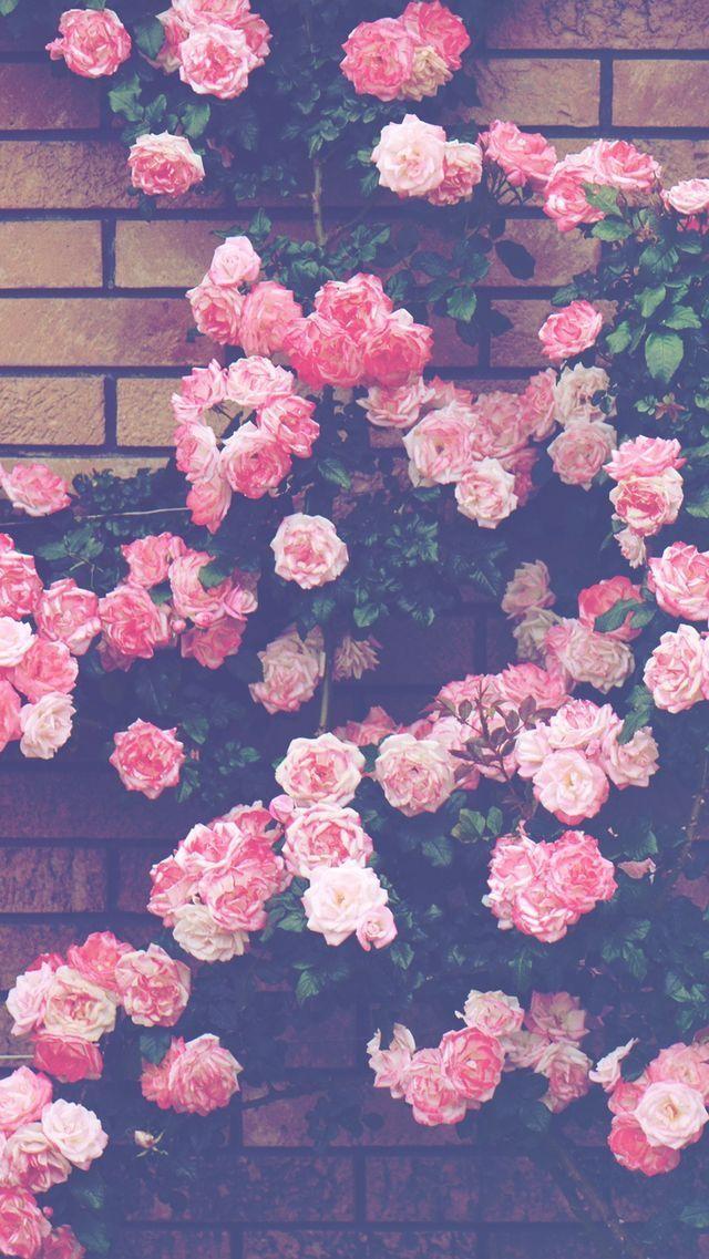 Pin By Azul Hernandez On Papeis De Parede Flower Iphone Wallpaper Flower Wallpaper Pretty Wallpapers Coolest pink flower iphone wallpaper