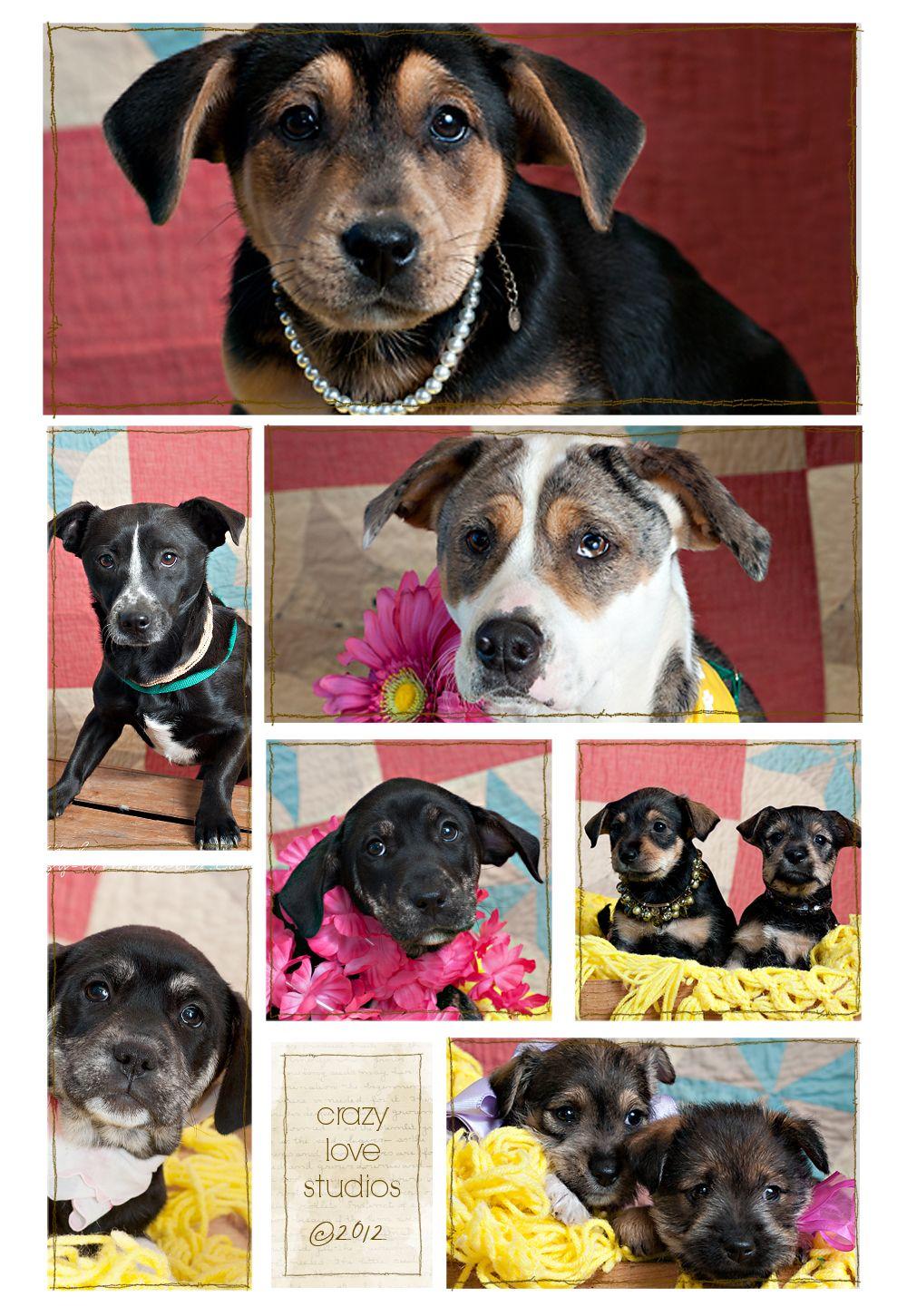adopt me! Humane society, Animals