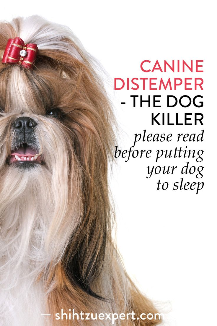 Pin On Canine Distemper
