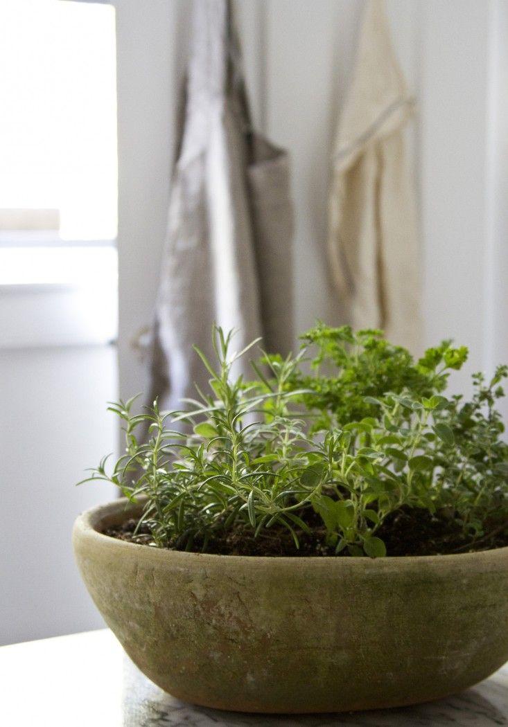 Small Space Diy Countertop Herb Garden Small Herb Gardens