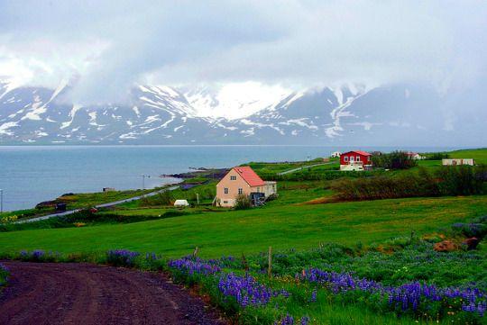 Hrisey, Iceland #Islandia