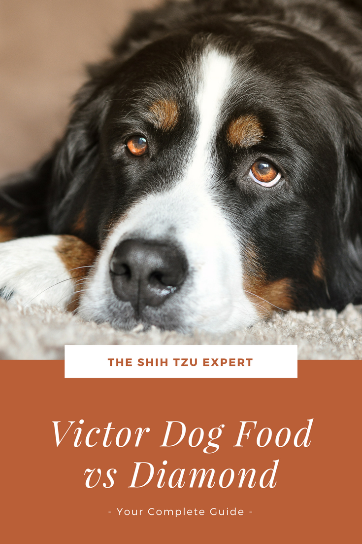 Victor Dog Food vs Diamond Naturals Your Complete Guide