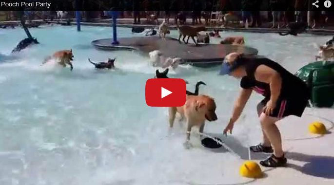 Pool party for pooches splish splash happy fur water time this video of over a dozen dogs enjoying a refreshing day at the water park is guaranteed to make you long for the dog days of summer solutioingenieria Images