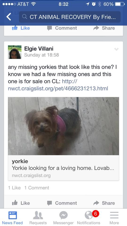 Found Dog Posted On Craig S List Dogs Yorkie Pets