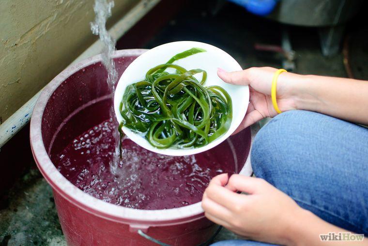 Make Seaweed Tea Liquid Fertiliser Step 3.jpg