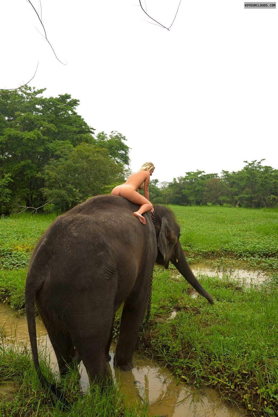 naked-girl-riding-elephant-naked-young-kids-porn-free-xxxvideos
