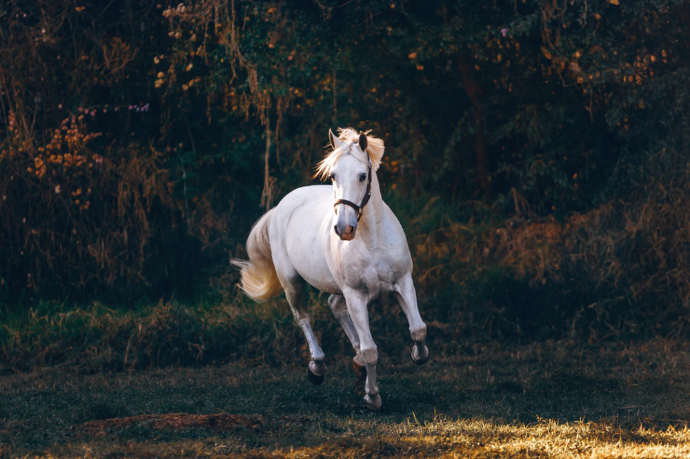 Shallow Focus Photo Of White Horse Running Photo Free Horse Image On Unsplash Horses Free Horses Horse Pictures