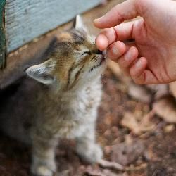 a7226a65359ca4e185199f7dd191773d - How To Get A Wild Kitten To Trust You
