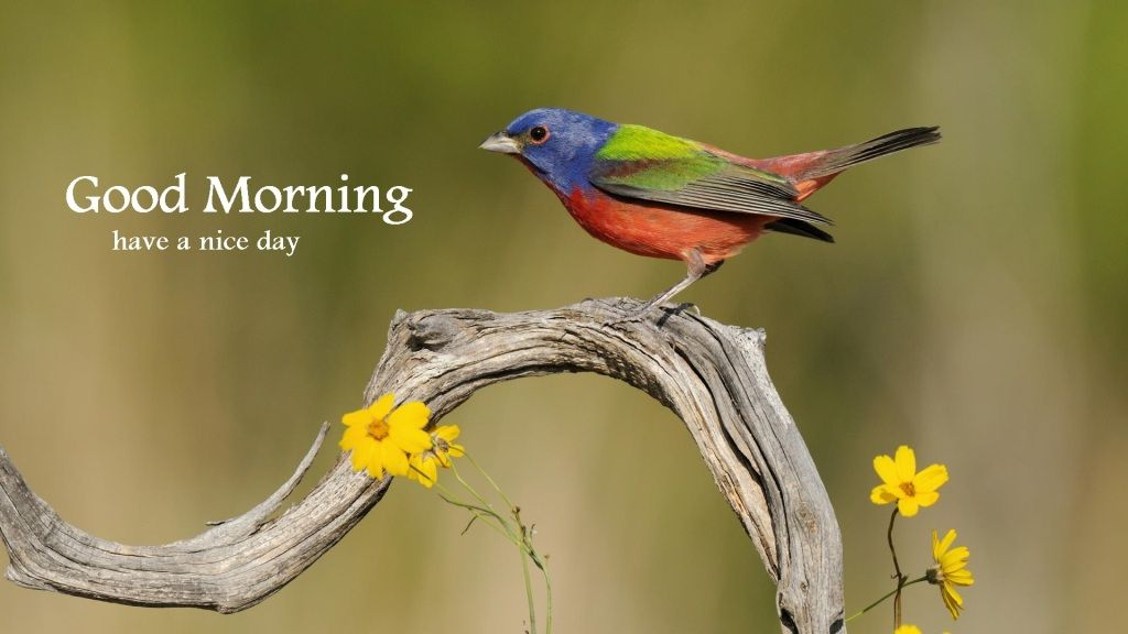 Beautiful Good Morning Birds Images Good Morning Beautiful Birds