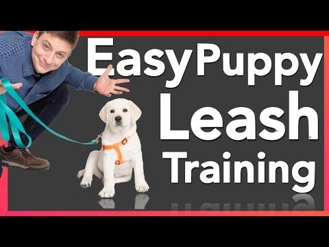 How To Train Puppy To Walk On A Leash Puppies That Stop And Are