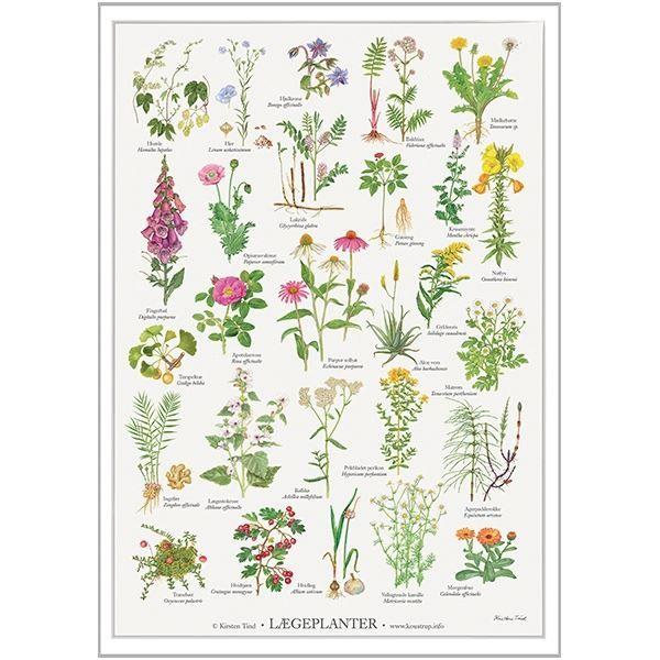 Koustrup Co Plakat Laegeplanter Spiselige Blomster Planter Plakater