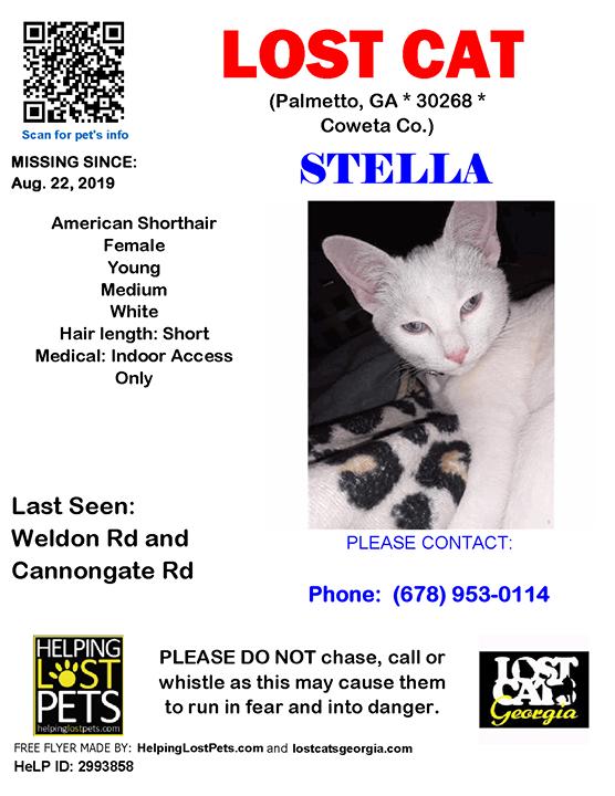 Lost Cat Palmetto GA Aug.22 2019 Closest Intersection