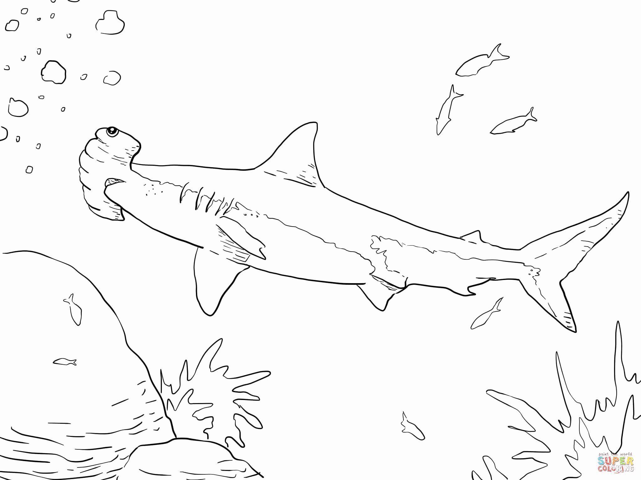 Hammerhead Shark Coloring Page New Hammerhead Shark To Print In 2020 Shark Coloring Pages Free Printable Coloring Pages Fish Coloring Page