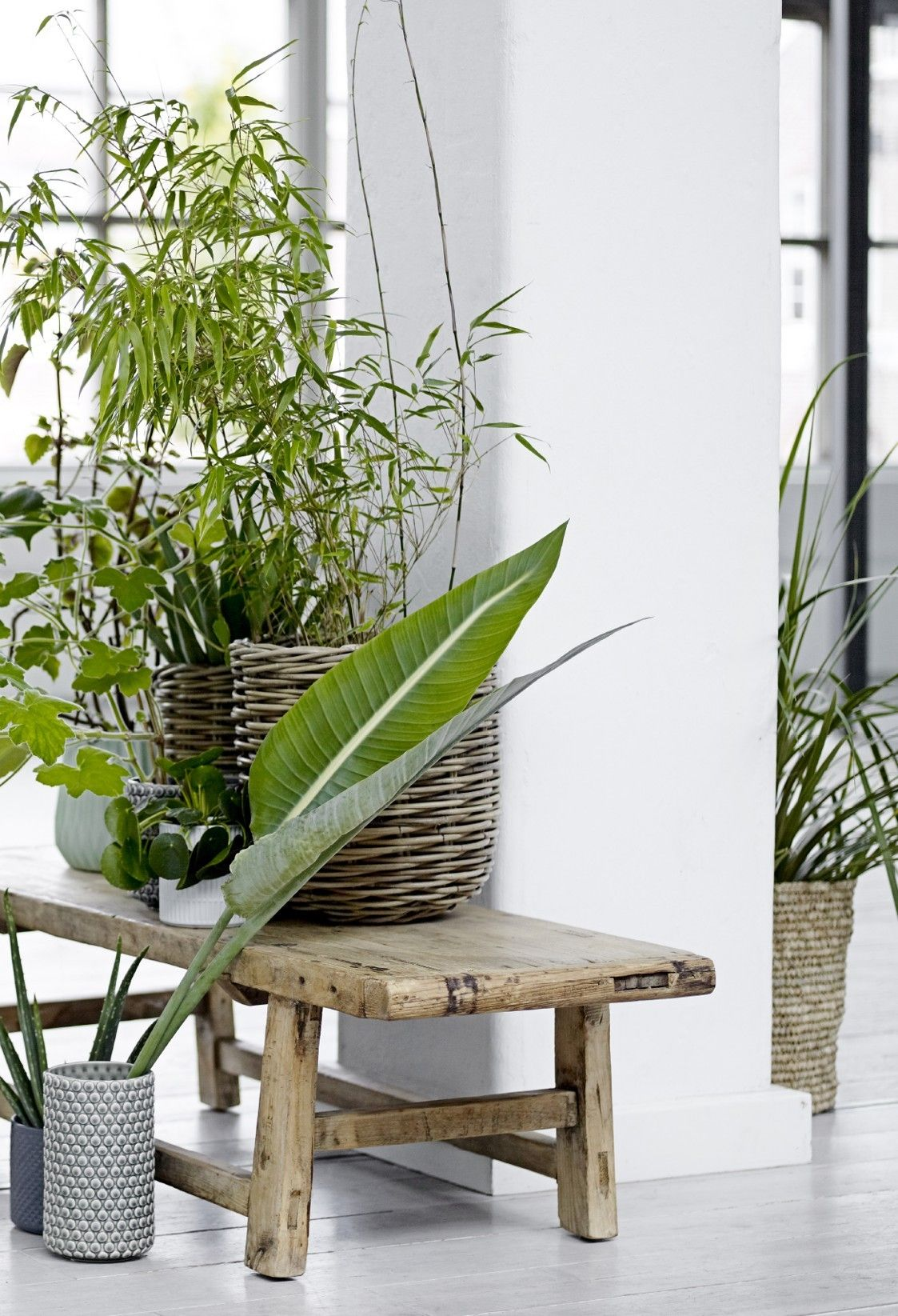 Plant Bench Indoor Breath Of Fresh Air In A Collection Of Green