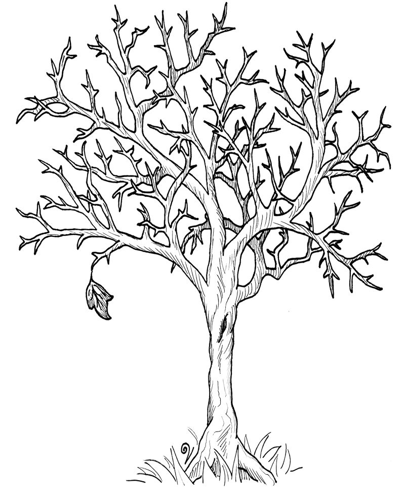 Autumn Fall Tree Without Leaves Coloring Page Tree Coloring Page
