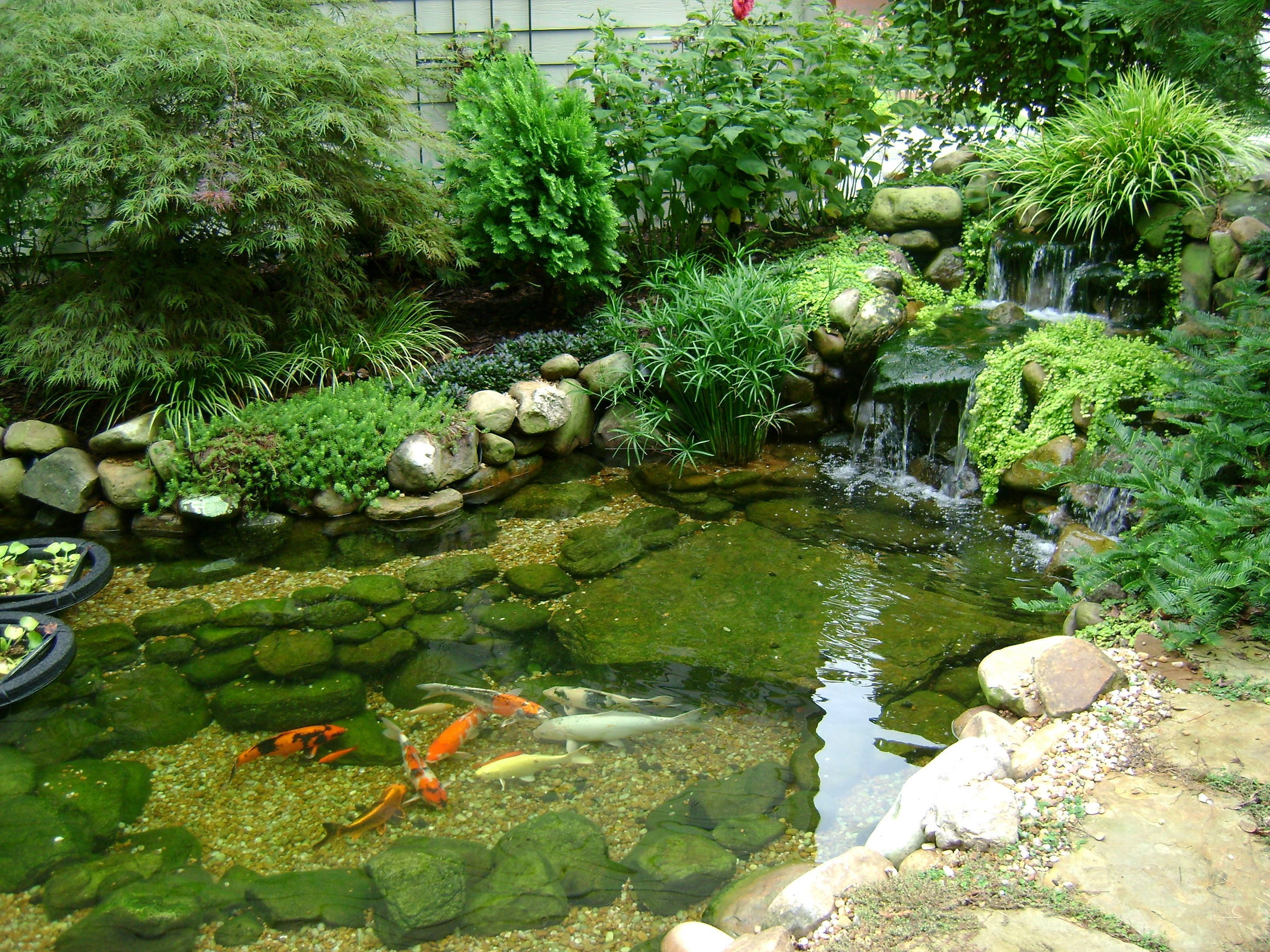30 Awesome Home Garden Landscaping Ideas With Fish Pond Design Decor It S Koi Pond Design Fish Pond Gardens Garden Pond Design