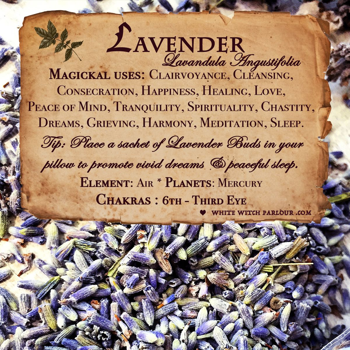 The Magick of Lavender Herbal magic, Magic herbs, Witch