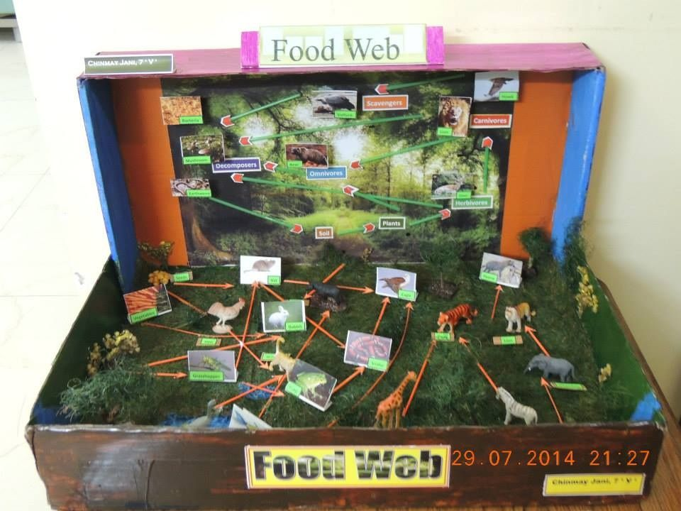Food Web Project By Chinmay Best Out If Waste Food Webs