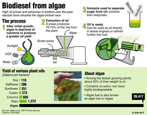 Biodiesel from algae? How fast could we advance this to reality if we used the $70B that we currently give to oil companies? ALTERNATIVE ENERGY REPORT IS WAITING FOR YOU... #alternativeenergy