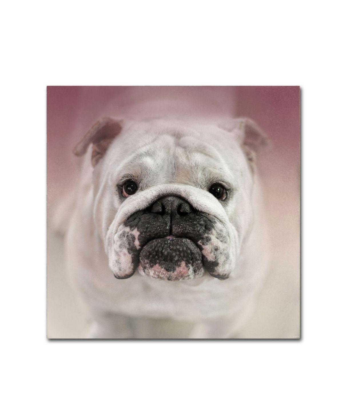 Jai Johnson Got Treat Bulldog Puppy Canvas Art 35 X 35 X 2