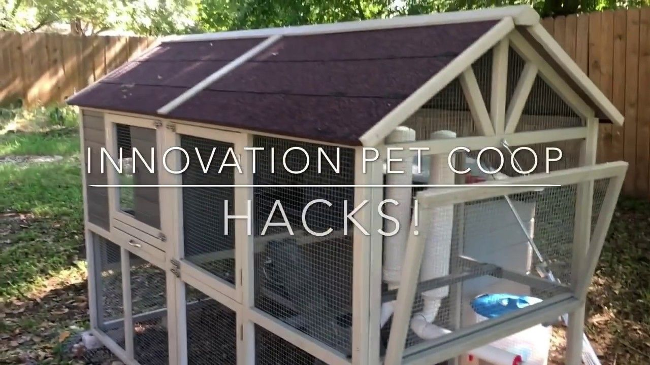 Chicken Coop Hacks For Every Backyard Chicken Owner Youtube Chickens Backyard Chicken Owner Building A Chicken Coop
