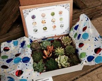 Succulent Treasures Candy Box. The Original by SucculentTreasures