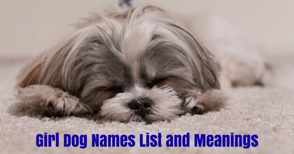 Female Dog Names And Meanings In 2020 Girl Dog Names Dog Names