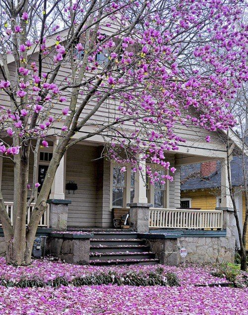 Grey house with purple tree. Gorgeous.@Elizabeth Lockhart Presley. If the Mexican house got a face lift