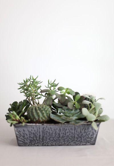 DIY succulent garden using old cake tin