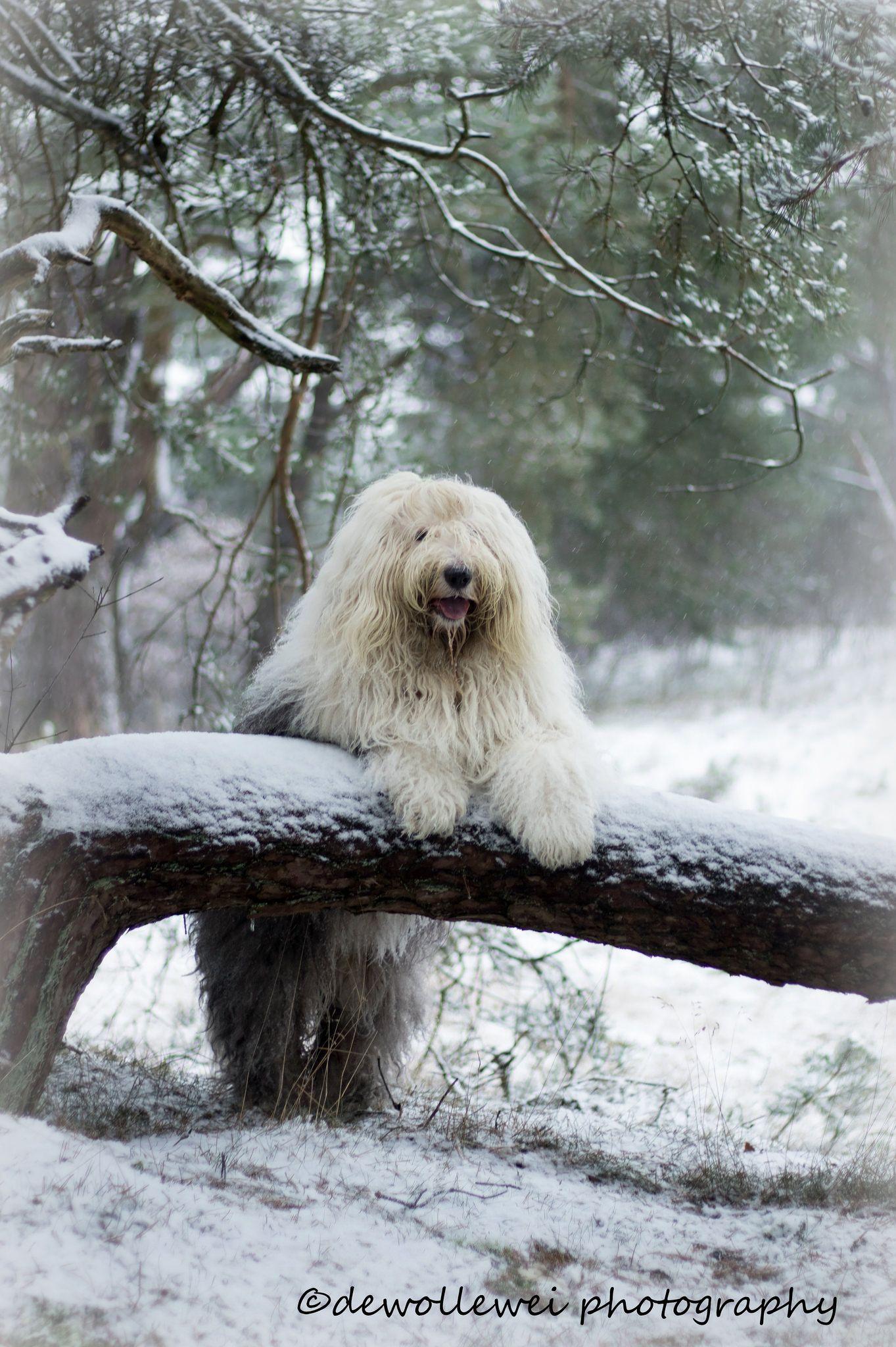 https://flic.kr/p/CRwDvp   snow pose