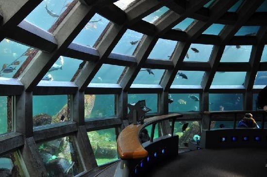 Seattle aquarium discount coupon