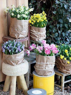 narzissen und tulpen in t pfe gepflanzt und in packpapier eingewickelt ein sch nes arrangement. Black Bedroom Furniture Sets. Home Design Ideas