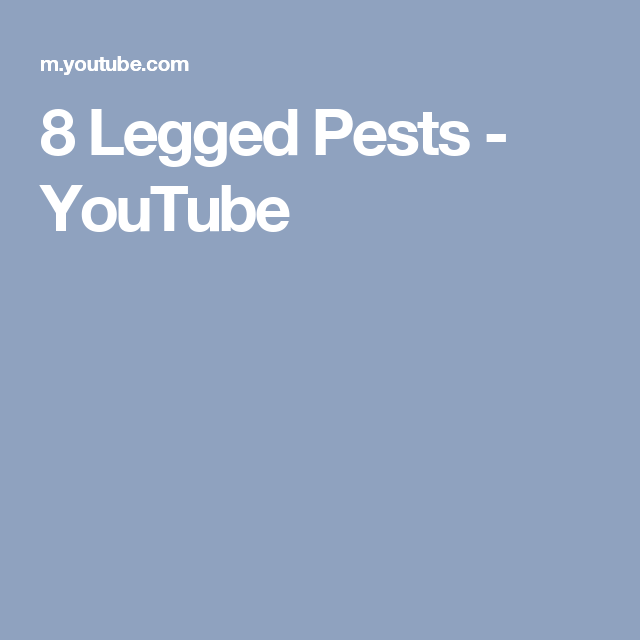 8 Legged Pests - YouTube
