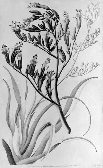 Flax Linen Flower Drawing Plant Drawing Flax Flowers