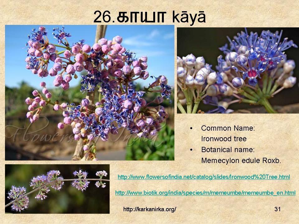 Slide31 in 2020 Flowers, Botanist, Ironwood tree