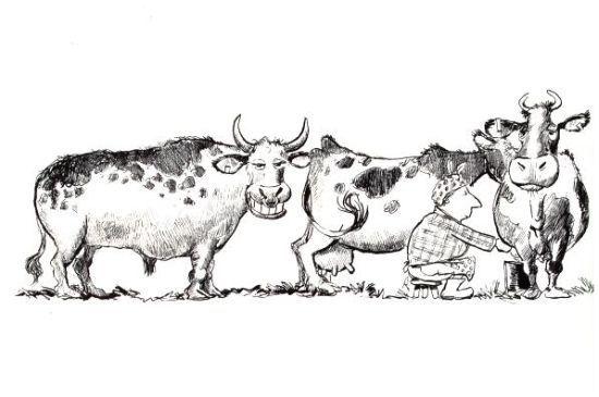 Ordenando Vacas Fotochiste Com Moose Art Fb Like Colorful Art