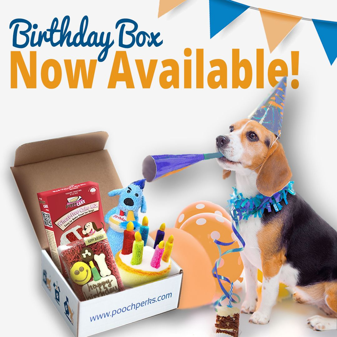 A Birthday Box Especially For Your Dog Now You Can Buy A