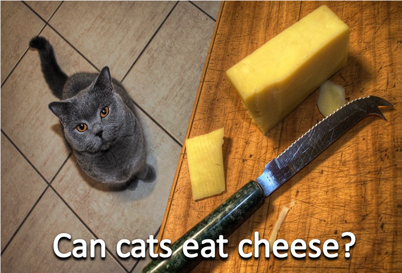 Can cats eat cheese? Dog food online, Dog food recipes
