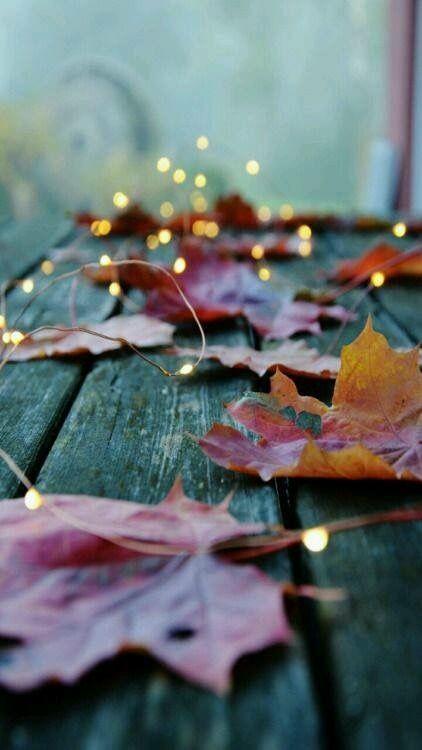 Maple Leaves Travelgoals Fall Wallpaper