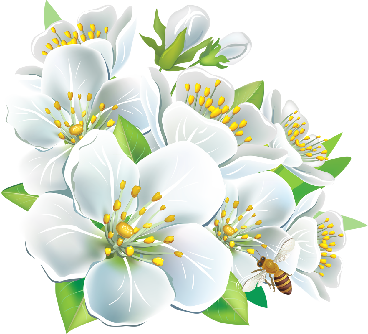 Large_White_Flowers_PNG_Clipart.png (1250×1133) Imagens