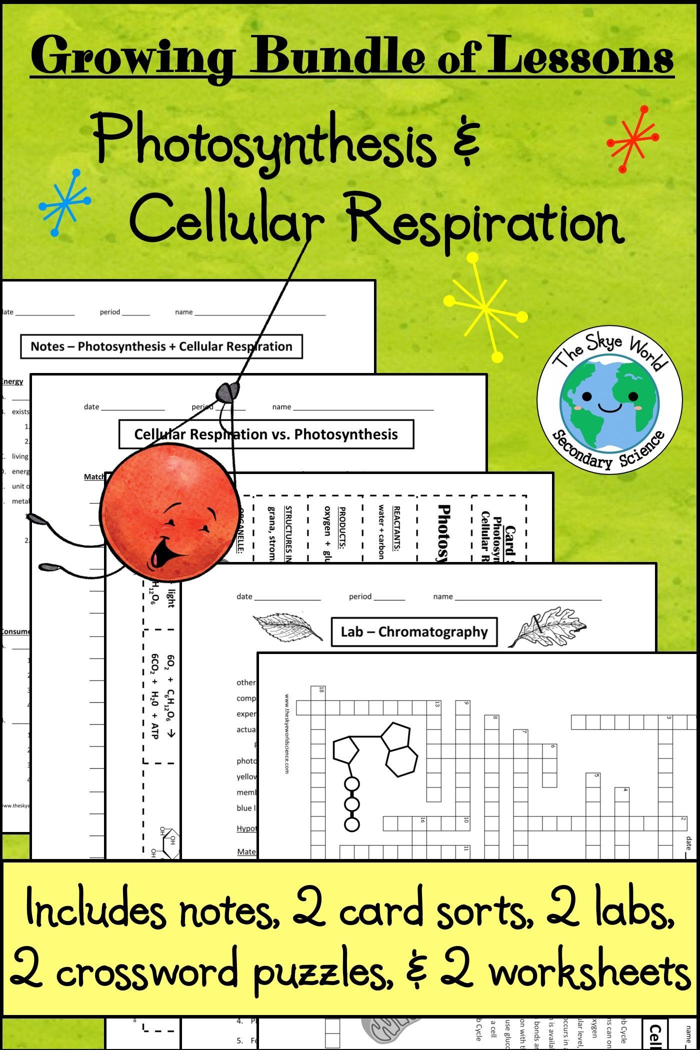Bundle of Lessons Photosynthesis and Cellular