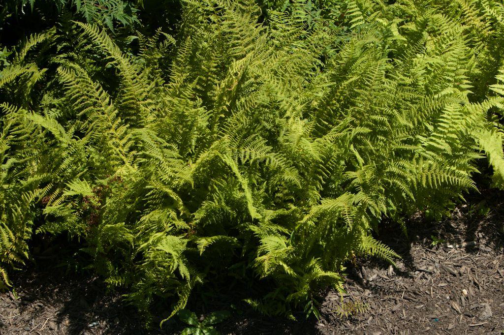 Rutgers University List Of Deer Resistant Plants 400 x 300